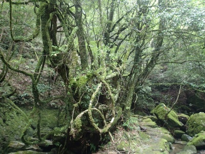 wakayama mountains jungle.jpg